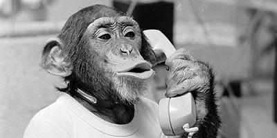 Mono al teléfono